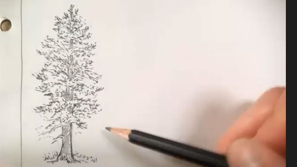 how to draw a tree - step 5