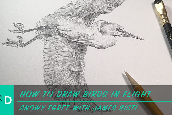 how to draw a bird in flight
