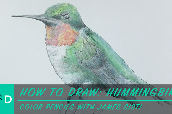 how to draw a hummingbird color pencil