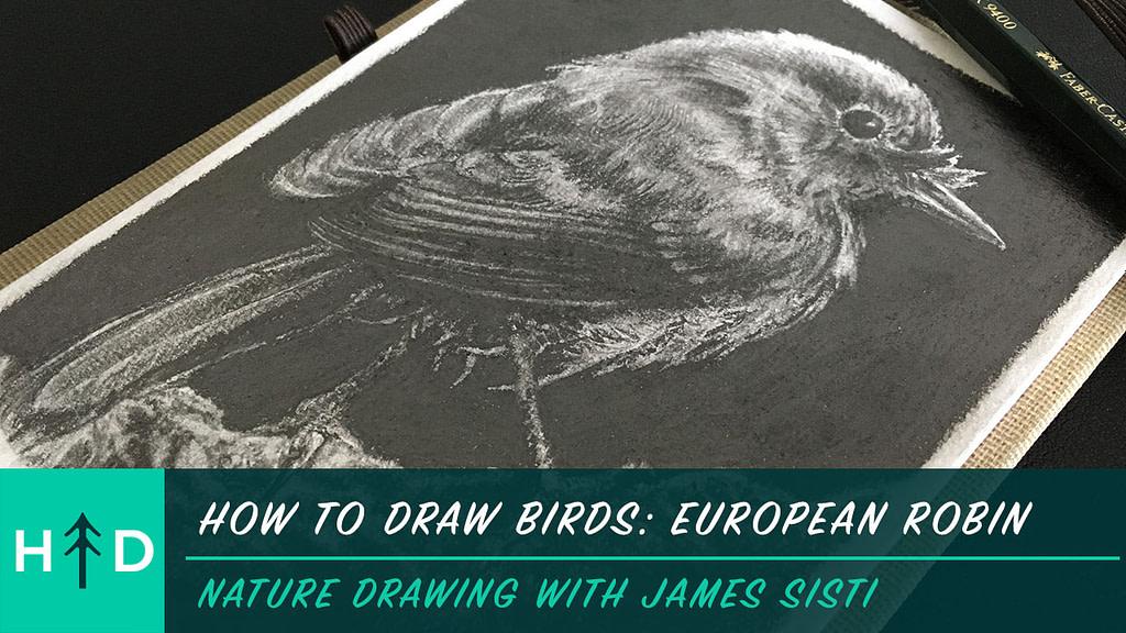 how to draw birds euro robin