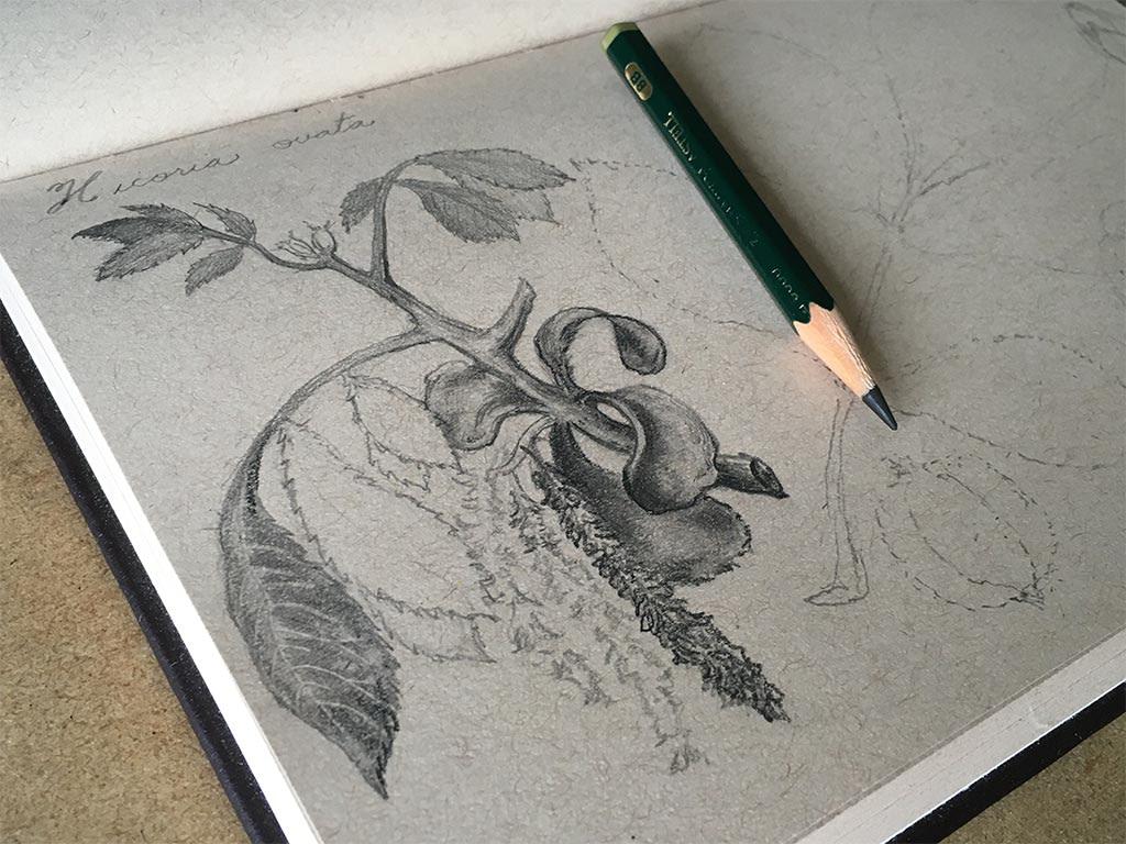 pencil drawing kit 1