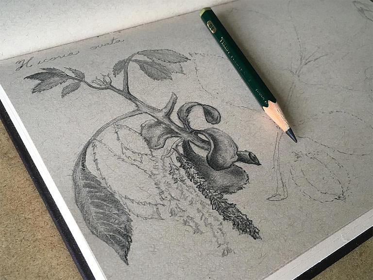 Pencil Drawing Kit [FREE NATURE DRAWING LESSON]