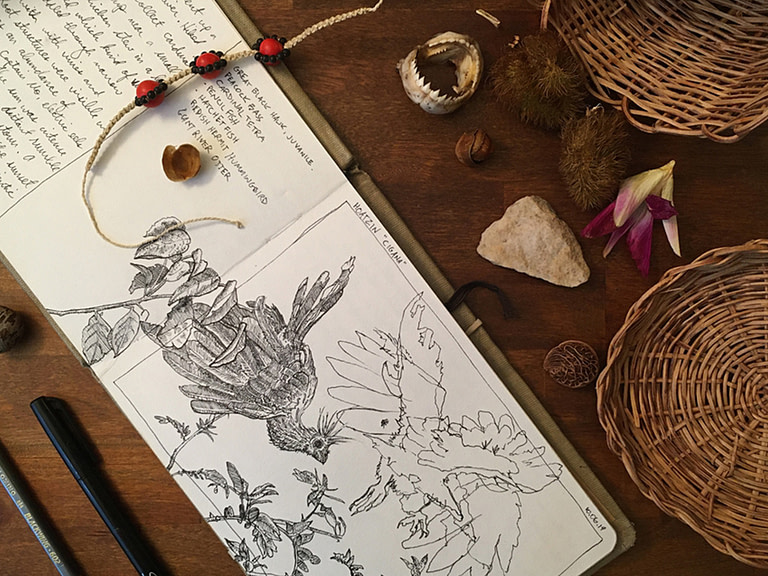 Journaling in Nature [FREE NATURE DRAWING LESSON]